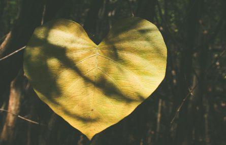 ROC ECLERC services funeraires cœur jaune obsèques deuil